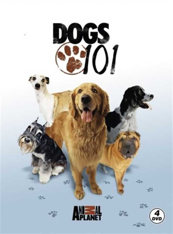 Ataklı - Discovery Channel - Dogs 101